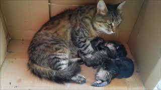 177). Котята - классные такие. 5 Котят наша Дурешка кошка принесла (05.09.17)