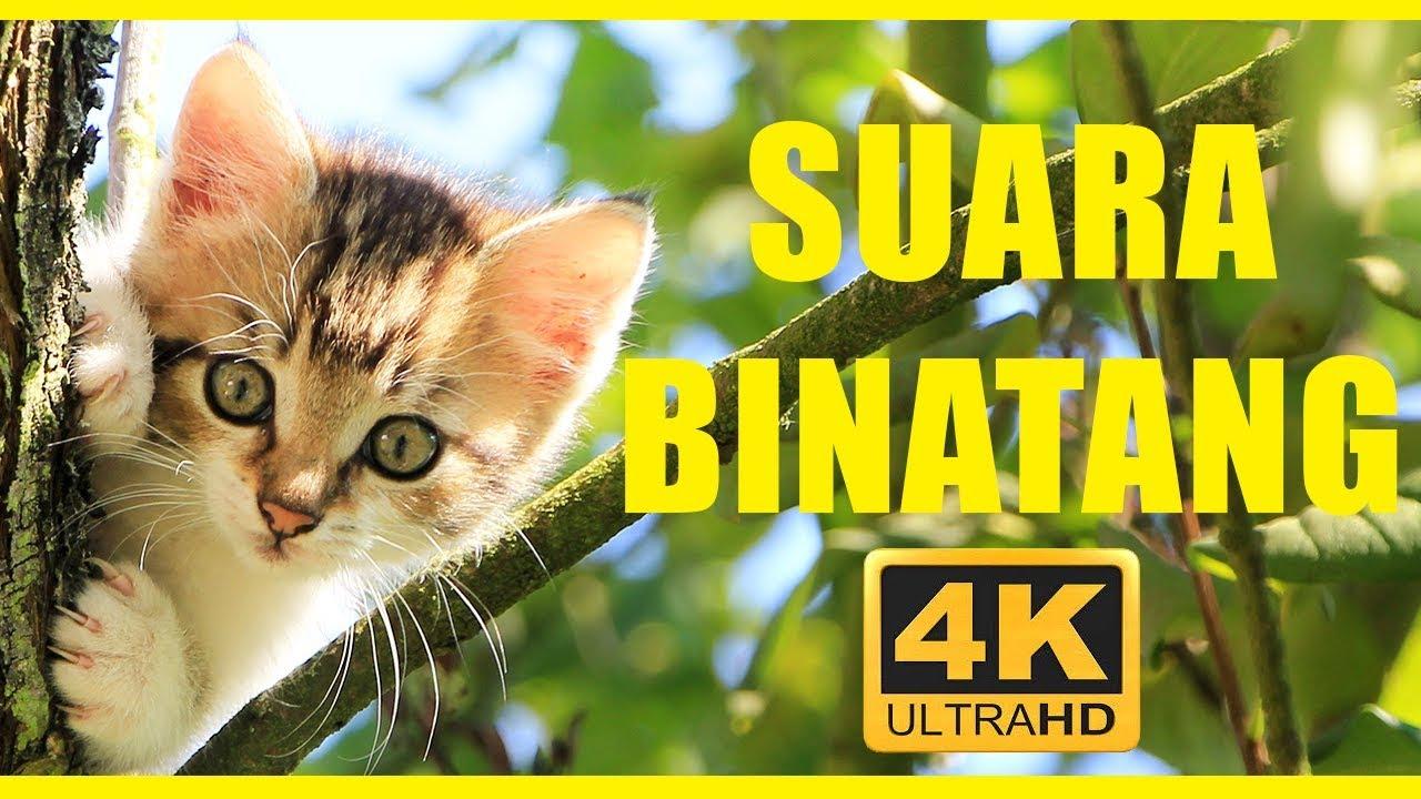 Download Suara binatang 40 menit | Hewan untuk anak-anak | Hewan indonesia