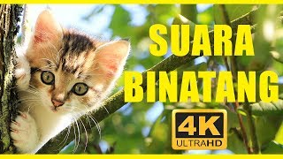 Suara binatang 40 menit | Hewan untuk anak-anak | Hewan indonesia