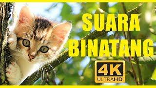 Download lagu Suara binatang 40 menit Hewan untuk anak anak Hewan indonesia MP3