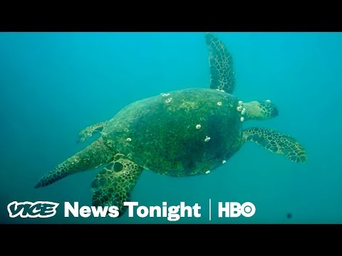Great Barrier Reef Crisis & Kids In The Wild: VICE News Tonight Full Episode (HBO)