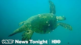 Great Barrier Reef Crisis & Gabby Giffords Fights On: VICE News Tonight Full Episode (HBO)