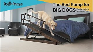 DoggoRamps - The Bed Ramp for BIG Dogs! (& medium dogs, too)