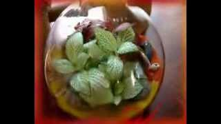 Сад за стеклом(Заказ флорариума в группе: http://vk.com/flora24., 2014-02-26T08:45:30.000Z)