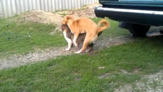 Собака - гей!