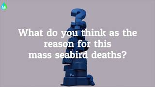 Mass seabird death mystery on Dutch beaches | Guillemots | North Sea beaches | Waterpedia