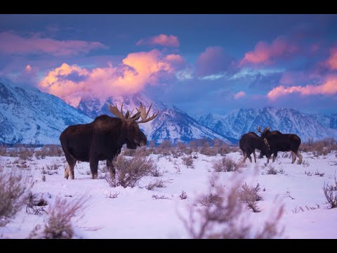 Introducing Yellowstone & Grand Teton National Parks