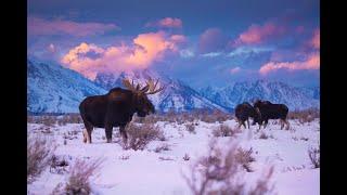 Introducing Yellowstone & Grand Teton National Parks