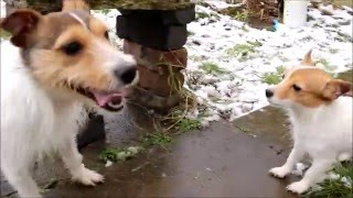Puppies first time in the snow! thumbnail