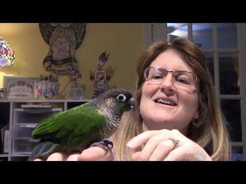 Birds as pets?