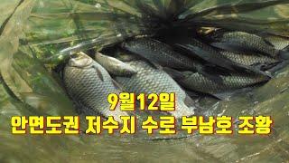 9월12일 안면도권 저수지 수로 부남호 붕어낚시 조황