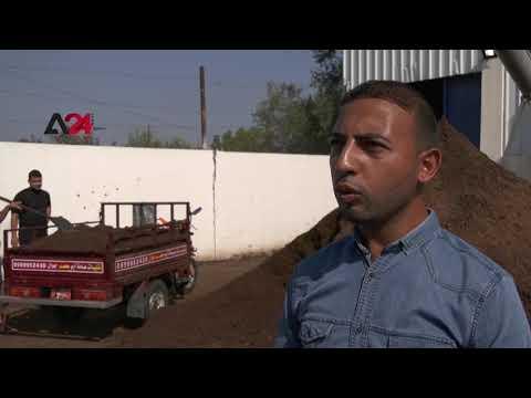 Palestine  Civil engineer graduates turn olive waste into energy