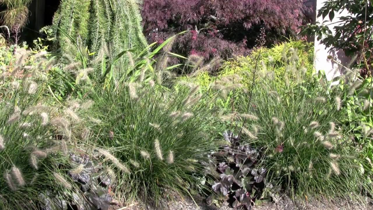 Ornamental grass garden design youtube for Tall grass garden