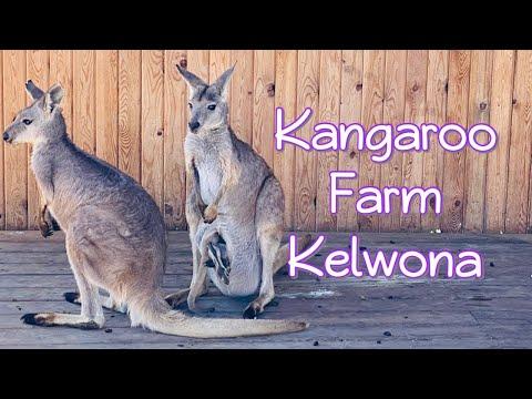 Kangaroo Farm visit in Kelowna | $100 Cad GiveAway |