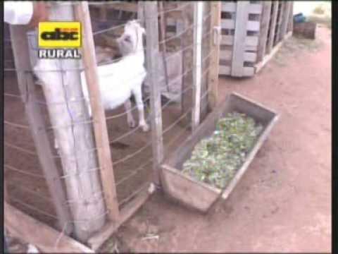 Instalaciones r sticas para cr a de cabras youtube for Como hacer un criadero de cachamas