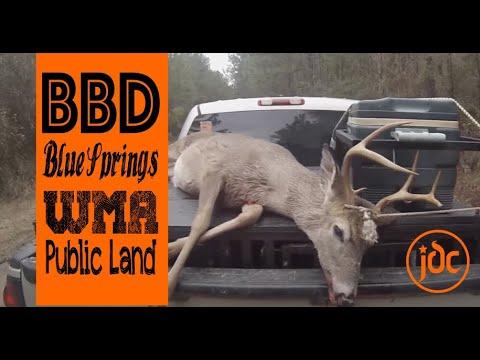 Deer Dog Hunting Blue Springs WMA Alabama - 7 Point Buck - KILLSHOT!!! 12-15-2018
