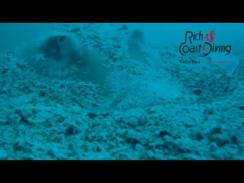 Amazing diving with CMERA in Playas del Coco, Costa Rica