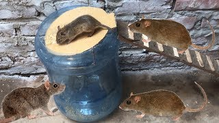 Amazing 10 Mice in Trapped 🐀 Best Rat Trap 🐀Good idea Mouse Trap 🐀 Black Mouse