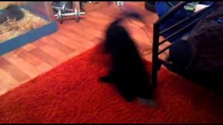 Verrückter Hund