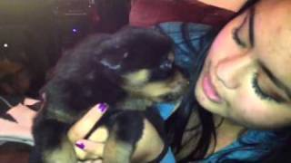 Rottweiler Puppy Howling Max