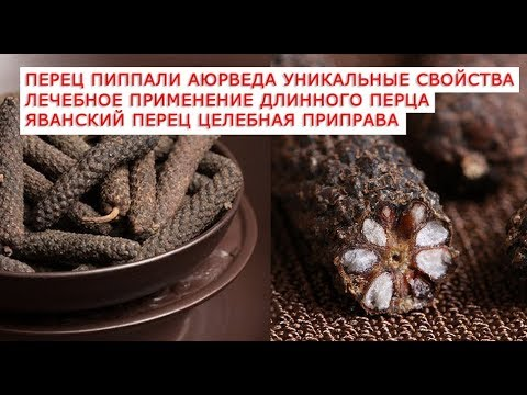 Перец пиппали аюрведа уникальные свойства лечебное применение длинного перца Яванский перец целебная