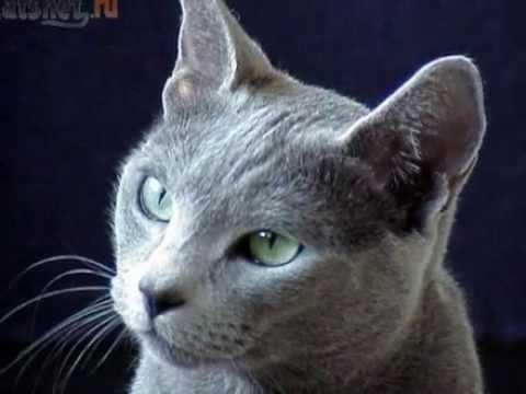 очень красивые кошки фото