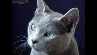 самые красивые кошки мира
