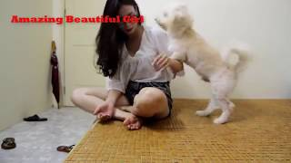 Dog and girl great bonding, Cute girl grooming her Dog at HOME#1