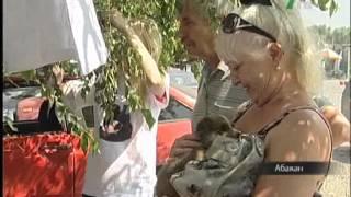 Волонтеры Абакана раздали бездомных животных