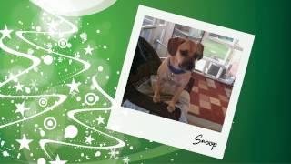 Mapr Holiday Pug Adoption Video