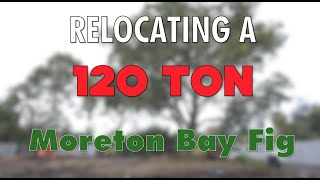 Arbor Co Zoo Tree Relocation