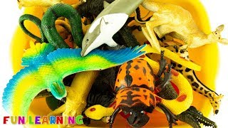 Learn Colors with Wild Animal Toys For Kids To Learn Animal Names