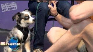 Secret Dog Training Advice: My Puppy Doesn't Listen! Help