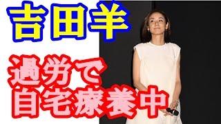 女優の吉田羊が過労による体調不良のため自宅療養中であることを、各ス...