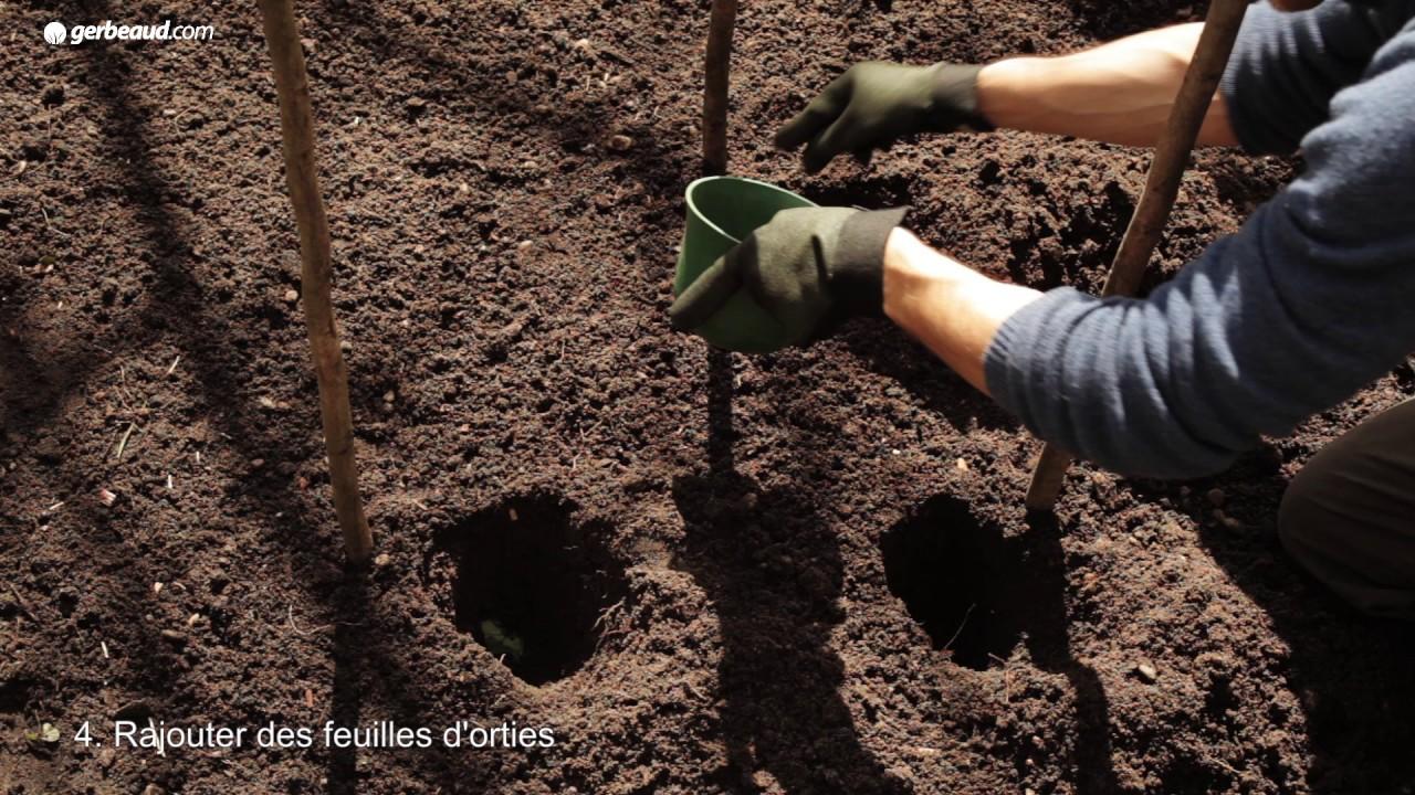 Que Planter En Octobre Sous Serre culture des tomates sous serre froide : en pratique