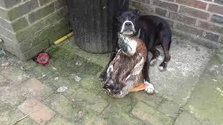Duck comforts Sad Dog - 976821