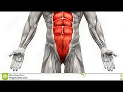 structures of inguinal canal structures of human body !! Lectures best tutorial human body explanati