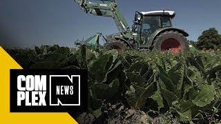 CDC Warns Romaine Lettuce Is Suspect Amidst E. Coli Outbreak