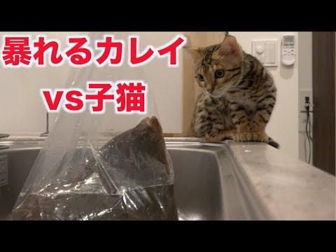 暴れるカレイを2匹の子猫に見せた結果・・・