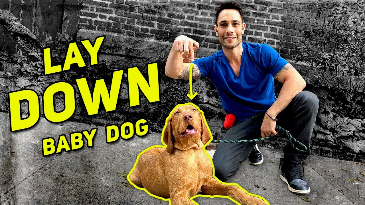 "DOG EXPERT TEACHES  ""LAY DOWN"" STEP BY STEP. BEGINNER TO ADVANCED/ TUTORIAL"