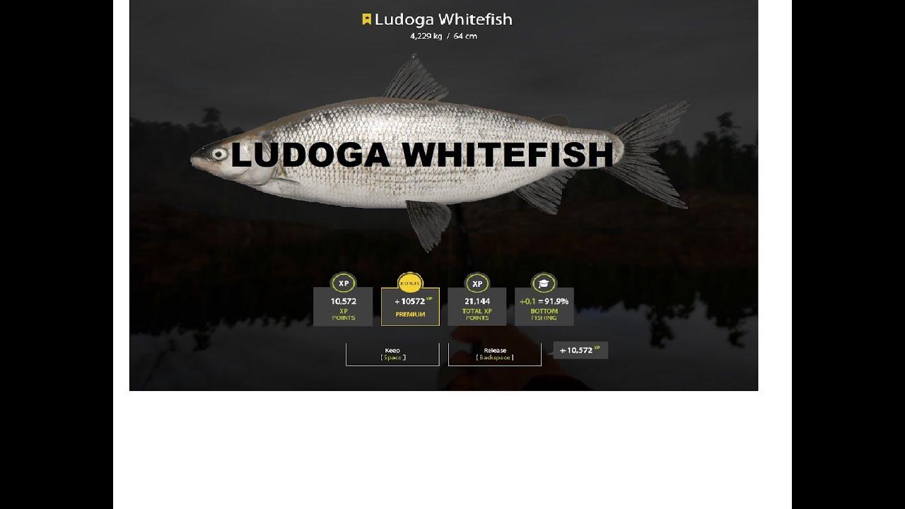 Russian Fishing 4:Ludoga Whitefish on Ladoga Lake - YouTube