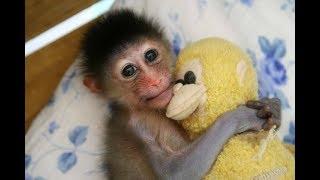 The Best Cute Baby Monkey Videos 2017