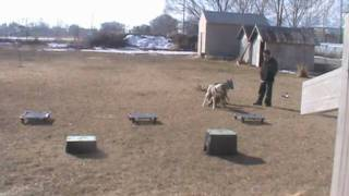 This Video Previously Contained A Copyrighted Audio Track. Due To A Claim By A Copyright Holder, The Audio Track Has Been Muted.     Dog Training Utah Introducing Pyro To The Pack