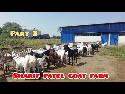 Part- 2 Goat feeding, Sharif Patel Goat Farm, Indore