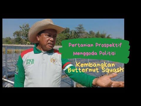 Pertanian Prospektif, Menggoda Politisi