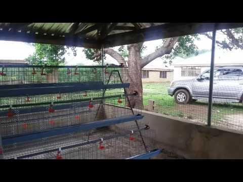 Jessam Cattle Ranch & Farms Ltd