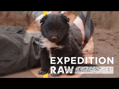 Explorers Save Abandoned Puppy | Expedition Raw