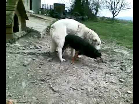 Suka Się Nie Dała I Psa Pospawała Youtube