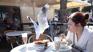 Azza's Breakfast Actually Gets Stolen By A Bird?!? - Vlog - Vlogger