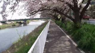 SONY DSC-HX5Vによる自転車の車載動画です。 桜撮影シリーズで、今回は...